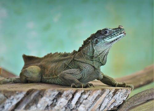 Foto profissional grátis de animal, balanças, borrão, exótico