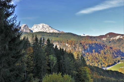 Foto profissional grátis de floresta, montanha