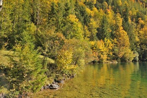Gratis arkivbilde med fjellskogen, høst, innsjø, natur