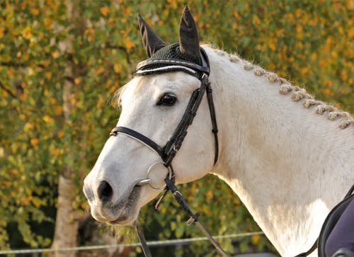 Foto profissional grátis de cavalo