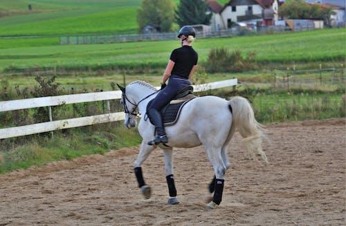 Foto d'estoc gratuïta de atracció, cavall, muntar, natura