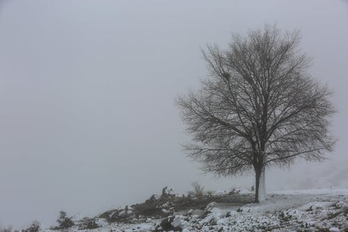 Free stock photo of minimal, snow, tree