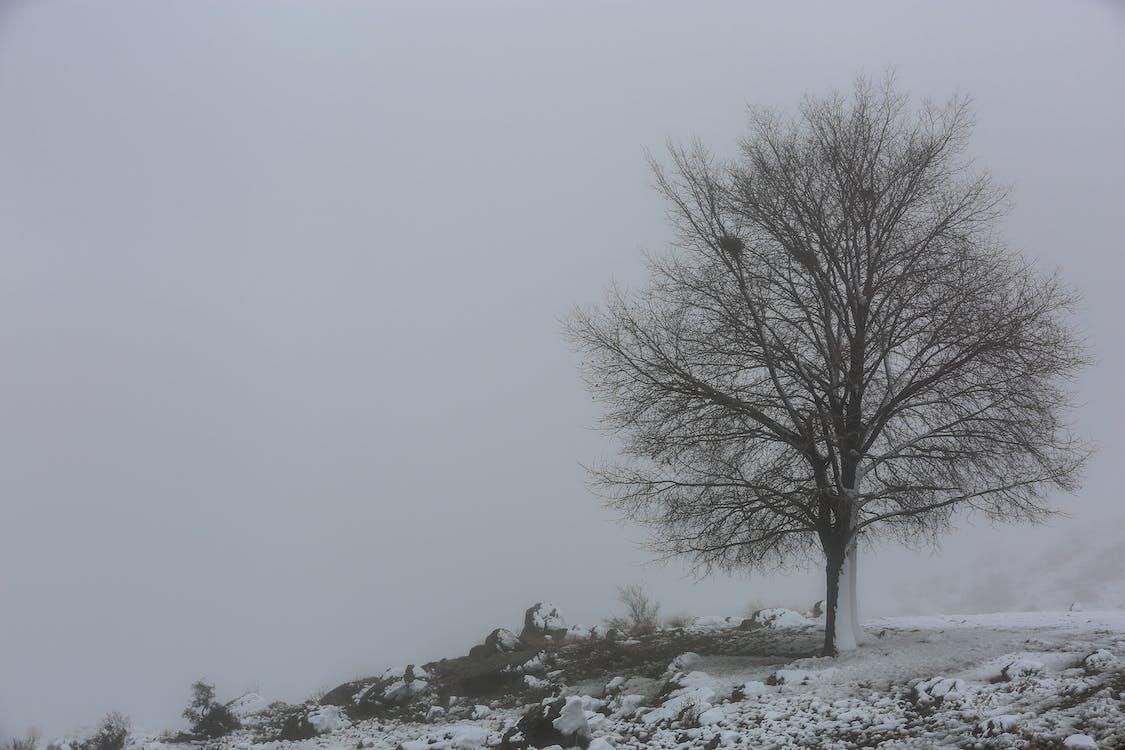 дерево, минимальный, снег