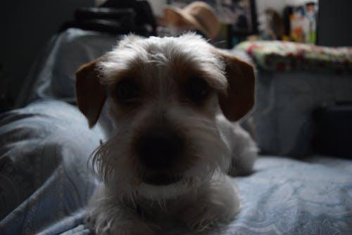 Ilmainen kuvapankkikuva tunnisteilla eläimet, koira, koiranpentu, lemmikit