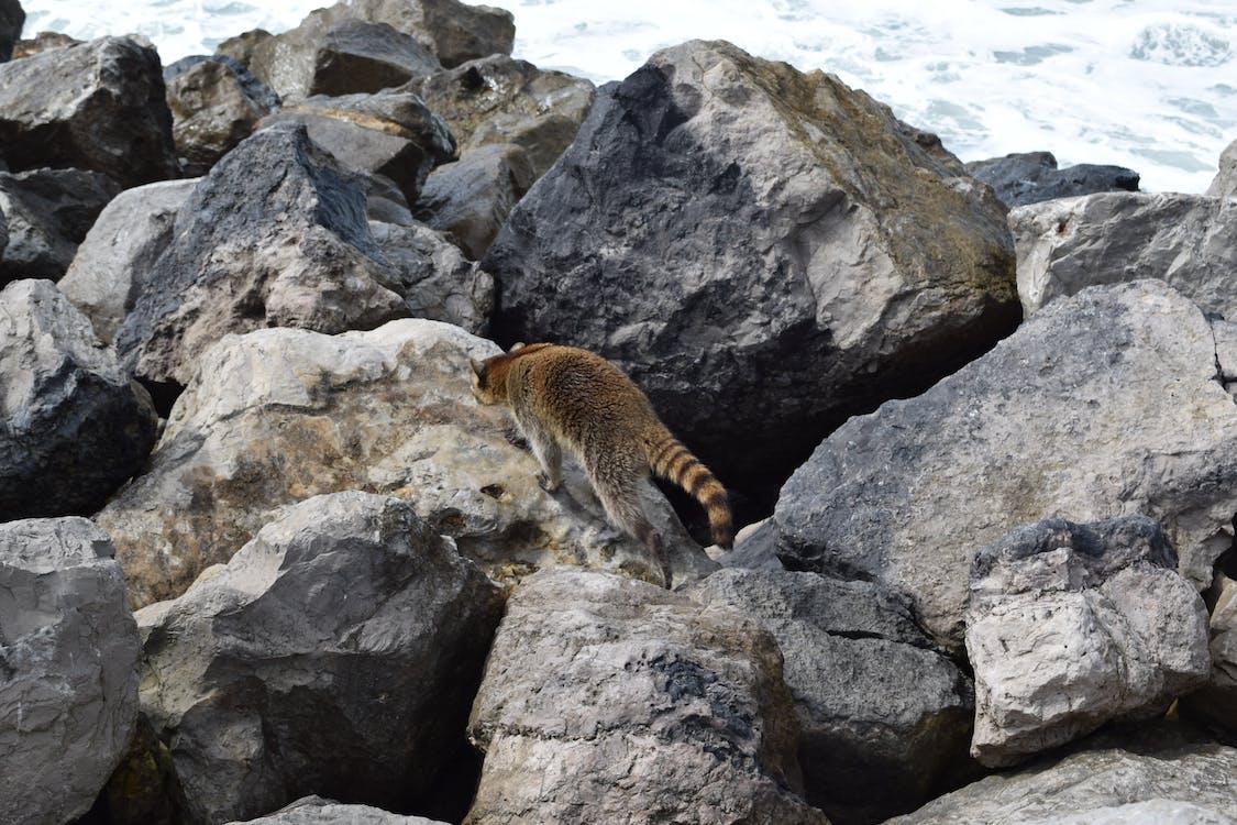 eläimet, hiekkaranta, kivet