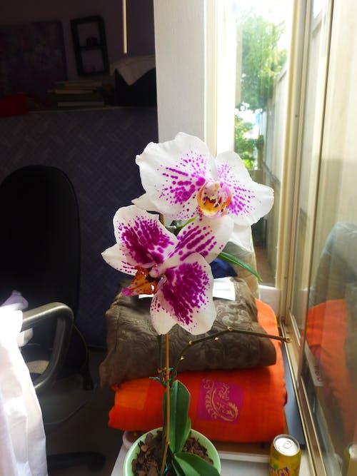 Ilmainen kuvapankkikuva tunnisteilla kasvit, kukat, orkidea, violetit kukat