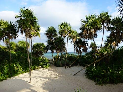 Free stock photo of beach, blue sky, nature, palm trees