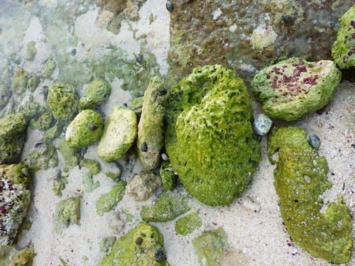 Free stock photo of beach, green, Mossy rocks, rocks