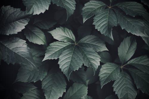 Darmowe zdjęcie z galerii z liście, roślina, zielony