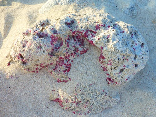 Free stock photo of beach, coral, coral rock, pink rock