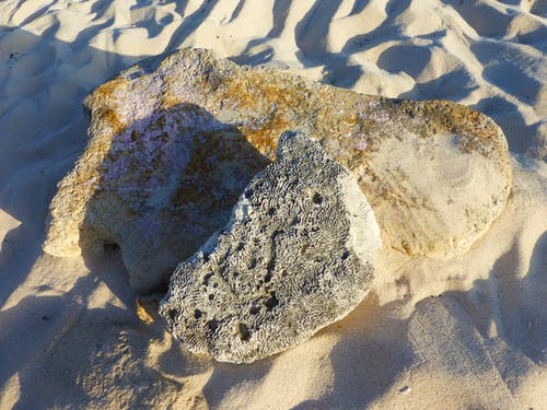 Free stock photo of beach, coral, coral rock, nature