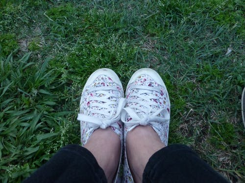 Free stock photo of flowers, grass, keds, plants