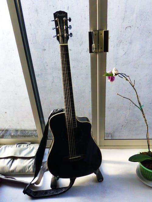 Ilmainen kuvapankkikuva tunnisteilla kitara, kukat, kukka, musiikki