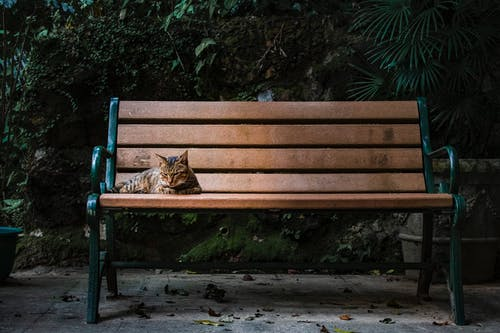 Gray Cat Lying on Brown Bench