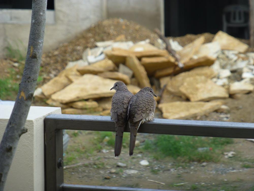 construction, love birds, lovebirds