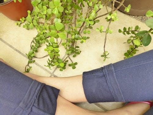 Imagine de stoc gratuită din cu picioarele încrucișate, grădinărit, introspecţie, picioare