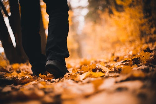 Selective Focus Photo of Person Walking on Dry Leaves