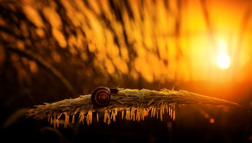 Shallow Focus Photo of Snail During Golden Hour