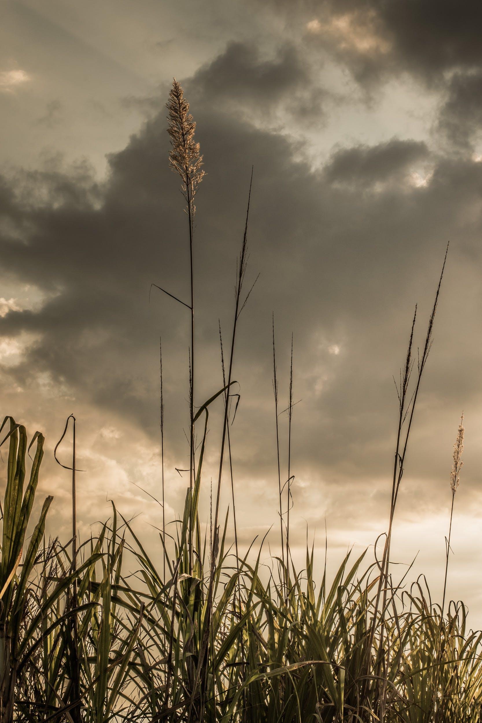 Free stock photo of cana, dark, puesta de sol