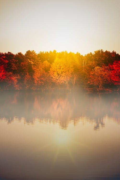 automne, brouillard, couleur d'automne