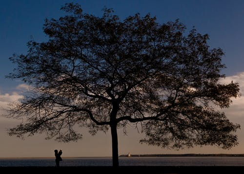 Free stock photo of boy photographing tree
