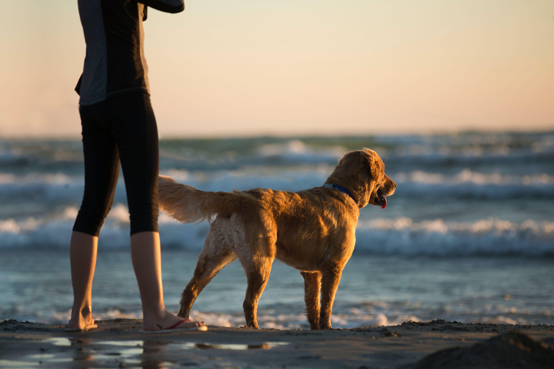 Person Standing Beside Dog in Shorline