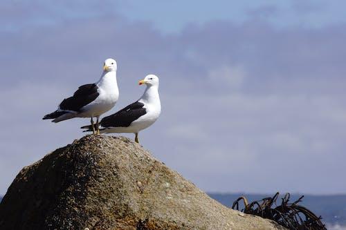 Photos gratuites de oiseau aquatique
