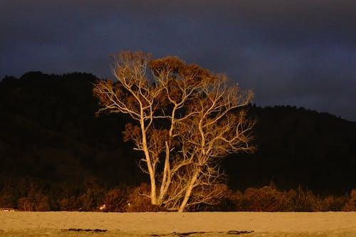 Photos gratuites de arbres