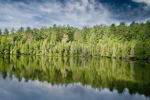 Foto profissional grátis de abetos, árvores, banco, calmo
