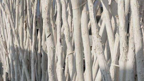 Ingyenes stockfotó árnyékok, fa, fából készült, fehér témában