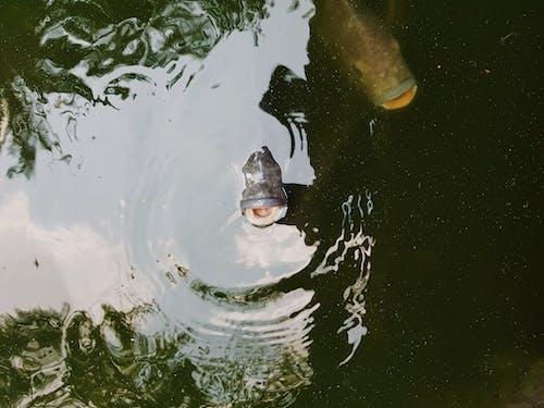 しぶき, 動物, 水, 池の無料の写真素材