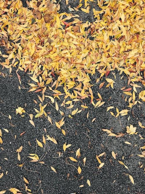 Fotobanka sbezplatnými fotkami na tému dno, jeseň, jesenné farby, jesenné lístie
