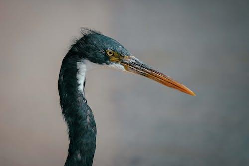 Foto profissional grátis de ao ar livre, ave, aviário, bico