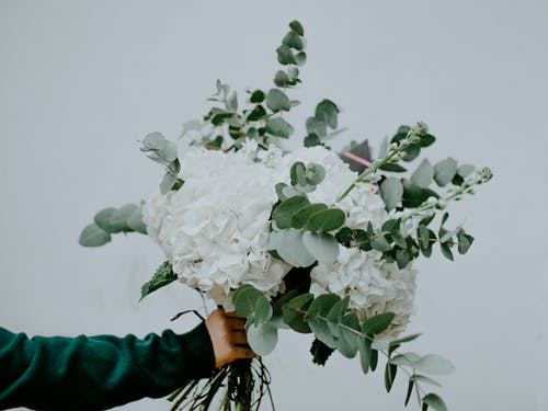 Photo of Person Holding White Flowers with Green Leaves In Front of White Background