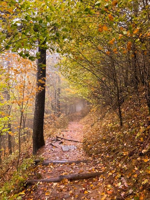 Immagine gratuita di autunno, camminare, natura, sentiero