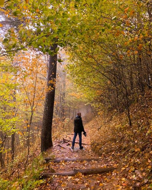 Immagine gratuita di autunno, escursione, escursionismo, montagne fumose