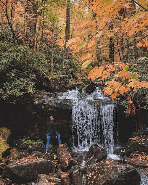 Immagine gratuita di arancia, autunno, bellezza, cascata