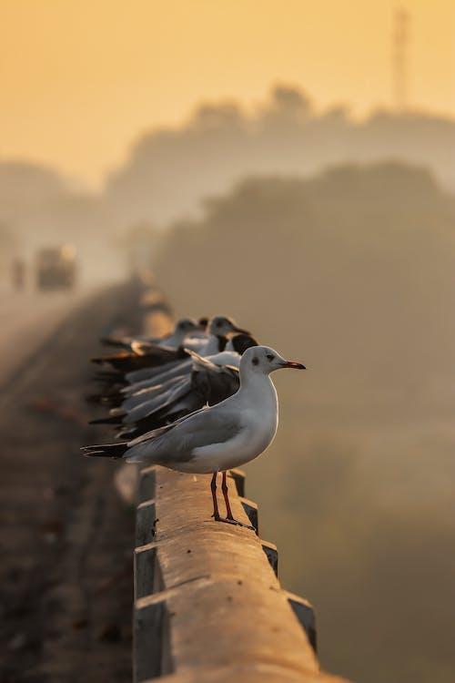 갈매기, 새가 앉아 있는, 야생동물, 조류의 무료 스톡 사진