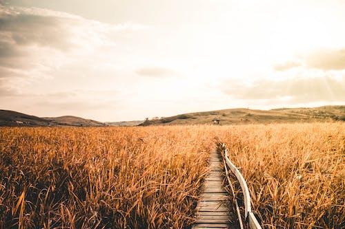 Photos gratuites de blé, brillant, campagne, ciel