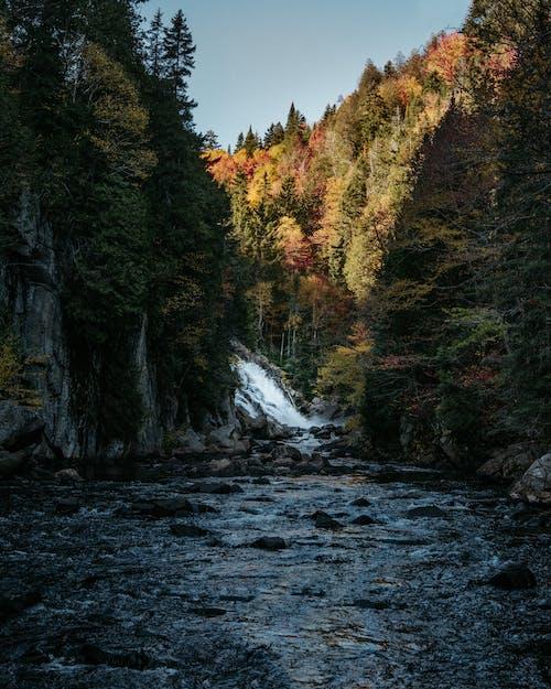 Immagine gratuita di alberi, cascate, creek, esterno