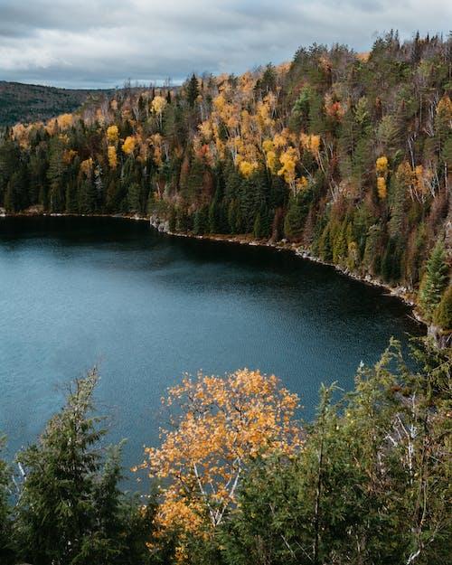 Gratis arkivbilde med innsjø, natur, naturskjønn, trær