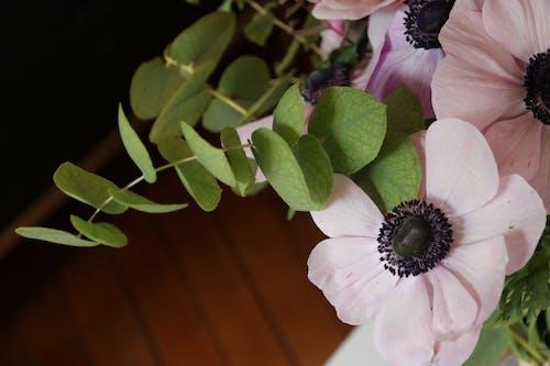 Ingyenes stockfotó gyönyörű virág, gyönyörű virágok, levelek, lomb témában
