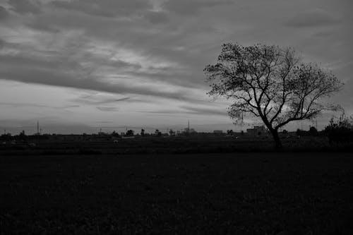 Gratis stockfoto met bw, bw-fotografie, donker, herfst
