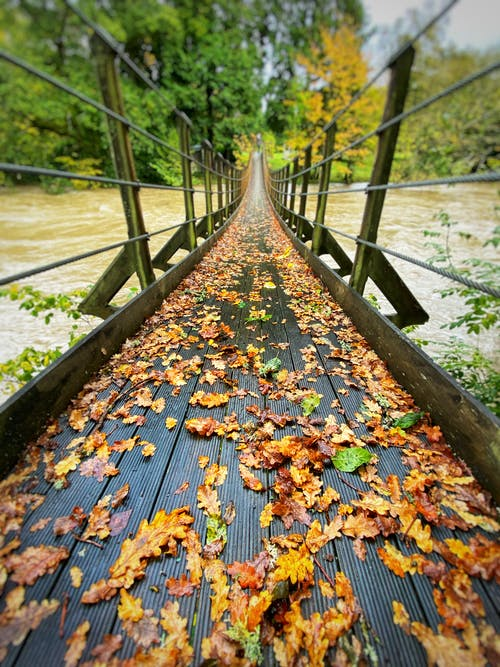 Free stock photo of autumn, autumn color, autumn leaves, bridge