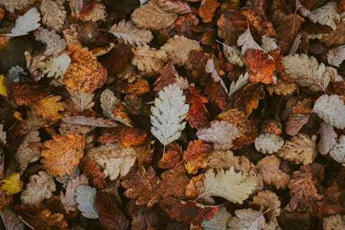 Foto stok gratis daun gugur, daun jatuh, daun kering, Daun-daun