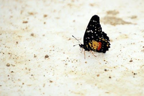 Darmowe zdjęcie z galerii z czarny, entomologia, fauna, kolorowy