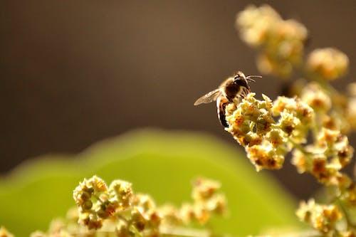 Darmowe zdjęcie z galerii z dziki, ekologia, entomologia, lato