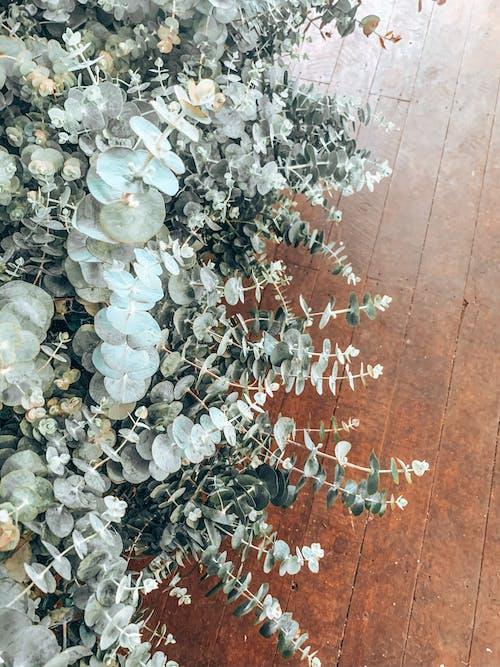 Základová fotografie zdarma na téma dřevěný, fotka zvysokého úhlu, kvetoucí rostlina, listoví