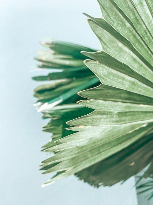 Kostenloses Stock Foto zu blatt, grün, pflanze
