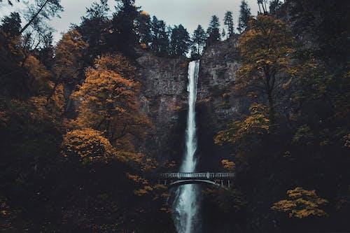 Ảnh lưu trữ miễn phí về cầu, cây, chảy, đẹp